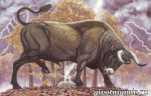 Тур-бык-животное-Описание-особенности-и-причины-вымирания-тура-1