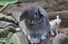 Болезни кроликов. Виды и профилактика болезней кроликов