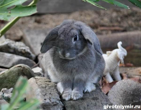 Болезни кроликов – профилактика и лечение