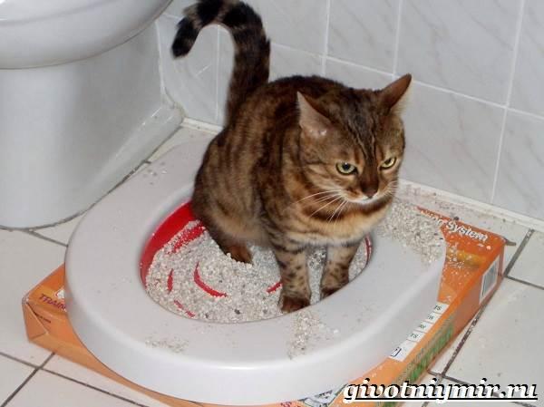 Как-приучить-кошку-к-унитазу-2
