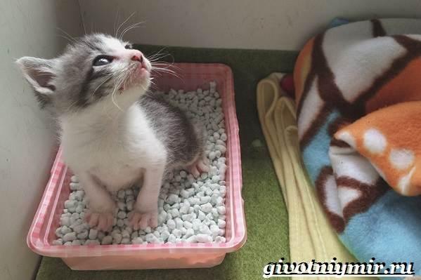 Как-приучить-кошку-к-унитазу-3