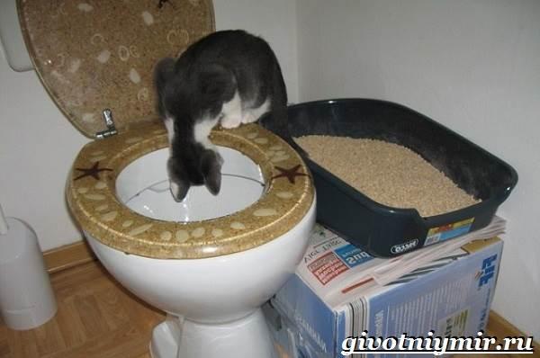Как-приучить-кошку-к-унитазу-6