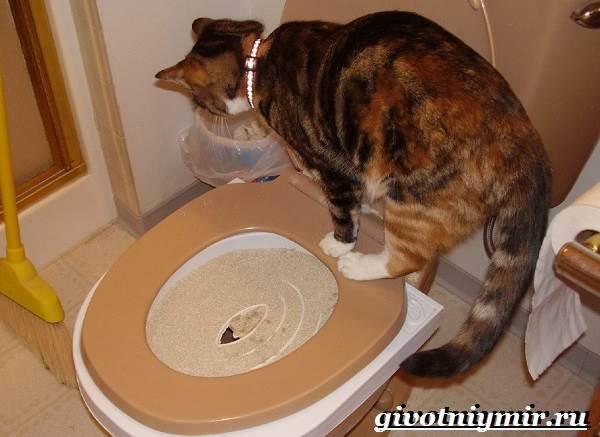 Как-приучить-кошку-к-унитазу-7