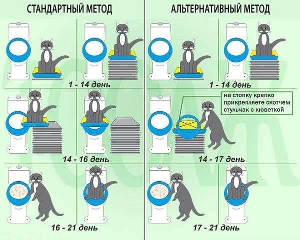 Как-приучить-кошку-к-унитазу-8