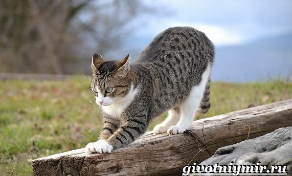 Как-приучить-кота-к-когтеточке-1