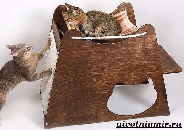 Как-приучить-кота-к-когтеточке-4
