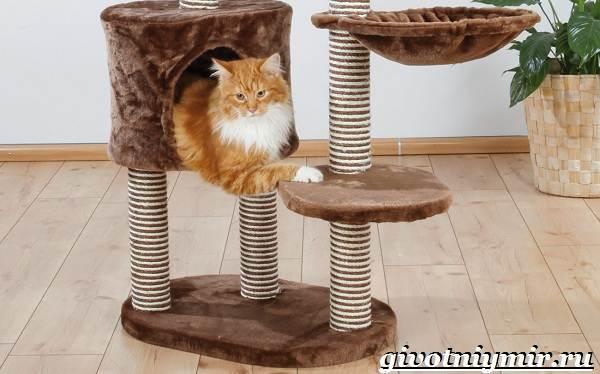 Как-приучить-кота-к-когтеточке-5