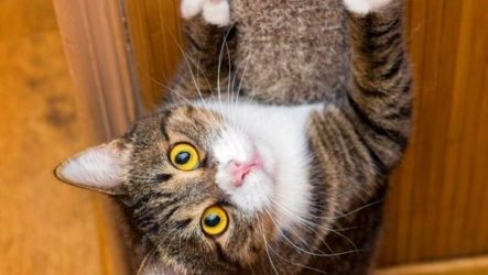 Как приучить кота к когтеточке?