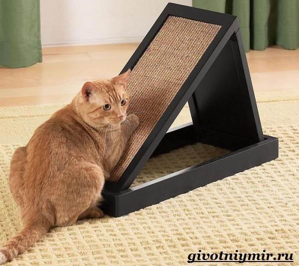 Как-приучить-кота-к-когтеточке-9