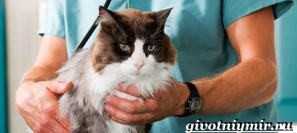Кастрация-котов-Описание-процедуры-и-уход-за-животным-после-операции-1