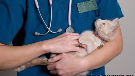 Кастрация котов. Описание процедуры и уход за животным после операции