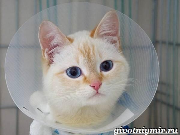 Кастрация-котов-Описание-процедуры-и-уход-за-животным-после-операции-4