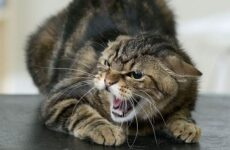 Бешенство у кошек: первые признаки и симптомы, профилактика и лечение