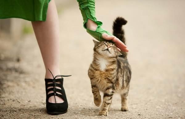 Бешенство-у-кошек-первые-признаки-и-симптомы-профилактика-и-лечение-10