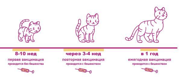 Бешенство-у-кошек-первые-признаки-и-симптомы-профилактика-и-лечение-12