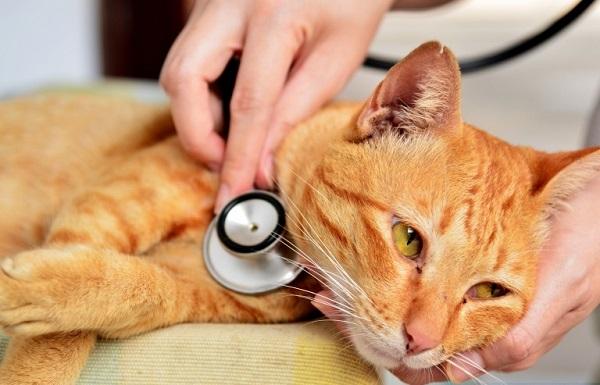 Бешенство-у-кошек-первые-признаки-и-симптомы-профилактика-и-лечение-15