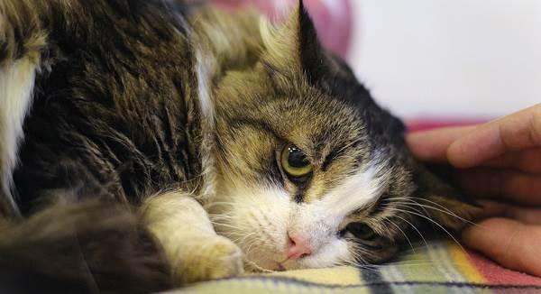 симптомы бешенства у котят