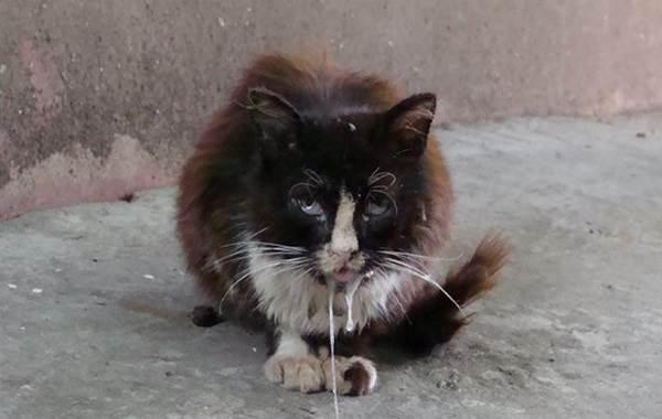Бешенство-у-кошек-первые-признаки-и-симптомы-профилактика-и-лечение-3