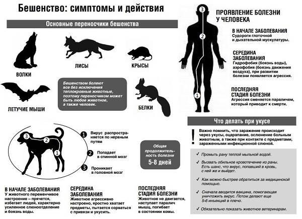 Бешенство-у-кошек-первые-признаки-и-симптомы-профилактика-и-лечение-4