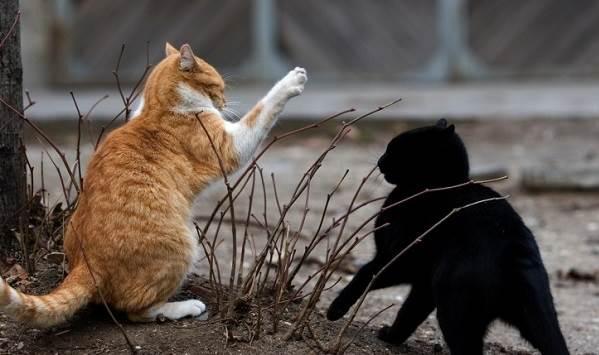 Бешенство-у-кошек-первые-признаки-и-симптомы-профилактика-и-лечение-9
