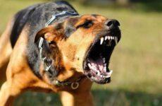 Бешенство у собак: первые симптомы и признаки, профилактика и лечение