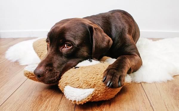 Можно ли по анализу крови определить бешенство у собаки медицинская справка по форме 302 н бланк