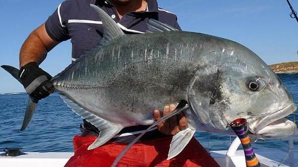 Каранкс-рыба-Описание-особенности-и-среда-обитания-рыбы-каранкс-6