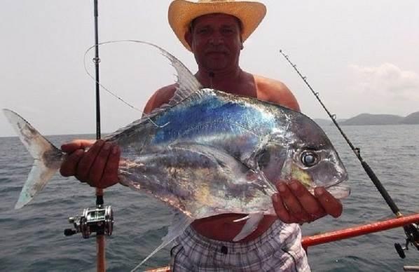 Каранкс-рыба-Описание-особенности-и-среда-обитания-рыбы-каранкс-7