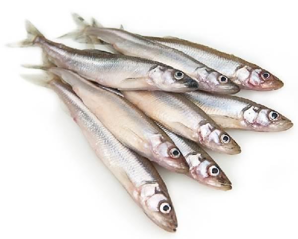 Корюшка-рыба-Описание-особенности-среда-обитания-и-виды-корюшки-5