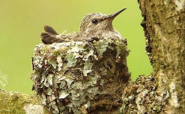 Крапивник-птица-Образ-жизни-и-среда-обитания-крапивника-14