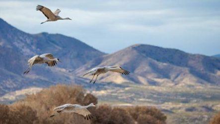 Перелетные птицы. Названия, описания и особенности перелетных птиц