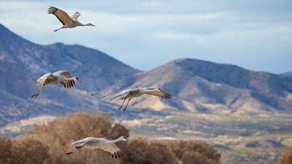 Перелетные-птицы-Названия-описания-и-особенности-перелетных-птиц-1