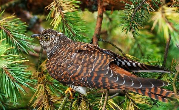 Перелетные-птицы-Названия-описания-и-особенности-перелетных-птиц-10