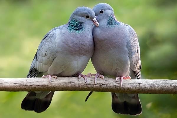 Перелетные-птицы-Названия-описания-и-особенности-перелетных-птиц-11