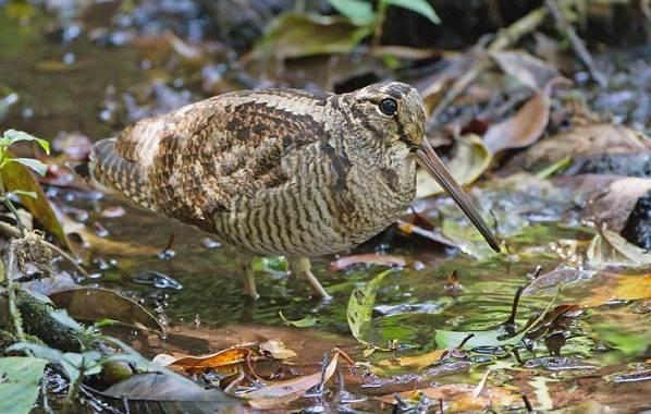 Перелетные-птицы-Названия-описания-и-особенности-перелетных-птиц-12
