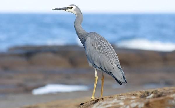 Перелетные-птицы-Названия-описания-и-особенности-перелетных-птиц-14