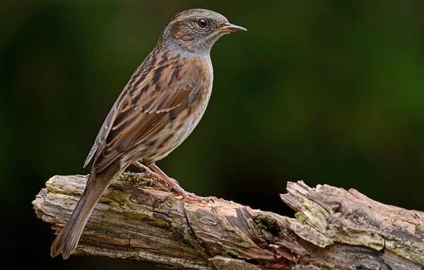 Перелетные-птицы-Названия-описания-и-особенности-перелетных-птиц-2