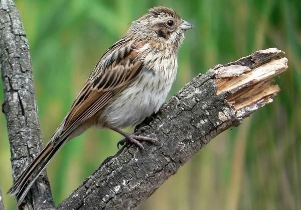 Перелетные-птицы-Названия-описания-и-особенности-перелетных-птиц-3