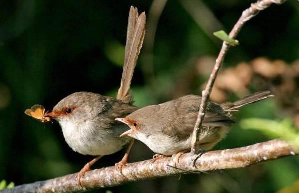Перелетные-птицы-Названия-описания-и-особенности-перелетных-птиц-4