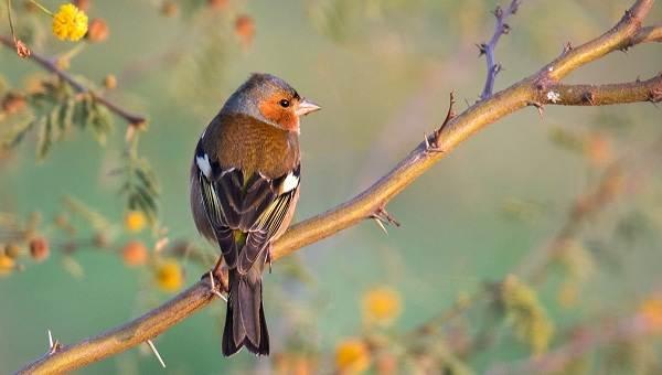 Перелетные-птицы-Названия-описания-и-особенности-перелетных-птиц-5