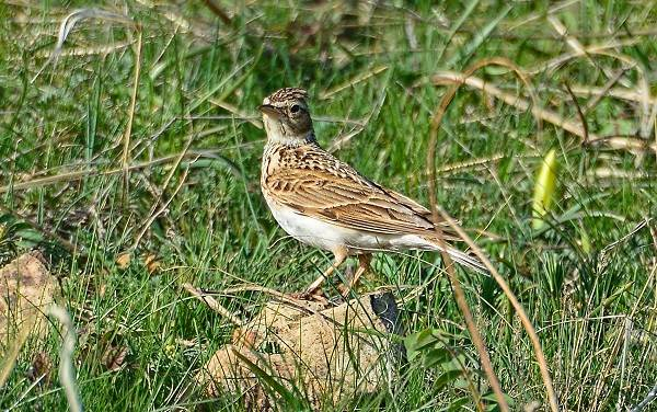 Перелетные-птицы-Названия-описания-и-особенности-перелетных-птиц-8