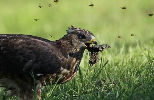 Птицы-Подмосковья-Названия-описания-и-особенности-птиц-Подмосковья-14