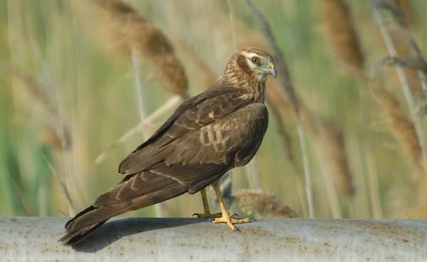 Птицы-Подмосковья-Названия-описания-и-особенности-птиц-Подмосковья-16