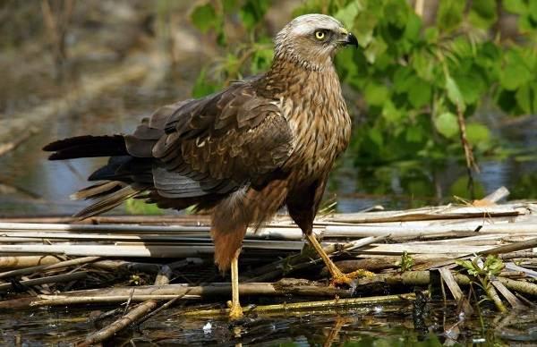 Птицы-Подмосковья-Названия-описания-и-особенности-птиц-Подмосковья-17