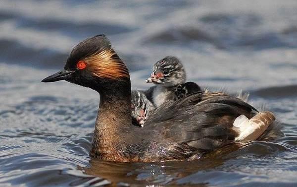Птицы-Подмосковья-Названия-описания-и-особенности-птиц-Подмосковья-2