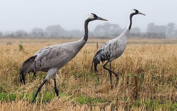 Птицы-Подмосковья-Названия-описания-и-особенности-птиц-Подмосковья-23