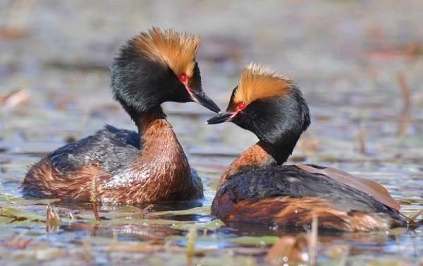 Птицы-Подмосковья-Названия-описания-и-особенности-птиц-Подмосковья-3