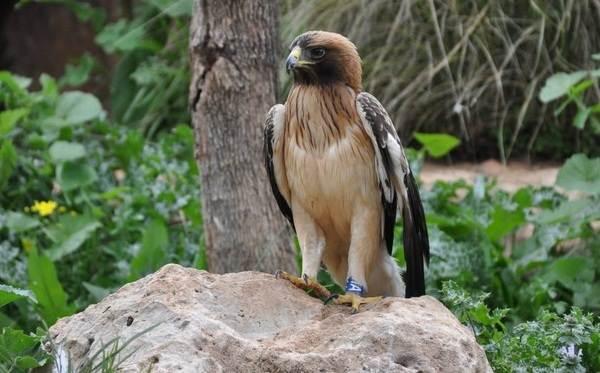 Птицы-Подмосковья-Названия-описания-и-особенности-птиц-Подмосковья-32