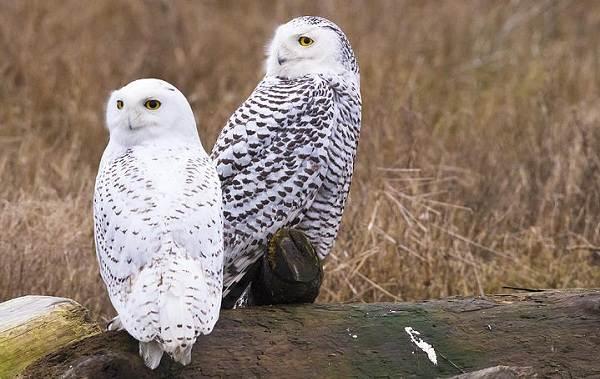 Птицы-Подмосковья-Названия-описания-и-особенности-птиц-Подмосковья-34