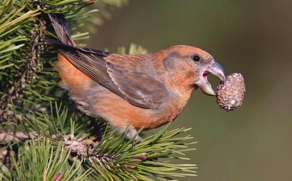 Птицы-Подмосковья-Названия-описания-и-особенности-птиц-Подмосковья-35